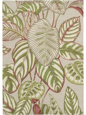 Calathea Olive • Online Tapijten